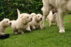mumandPuppies